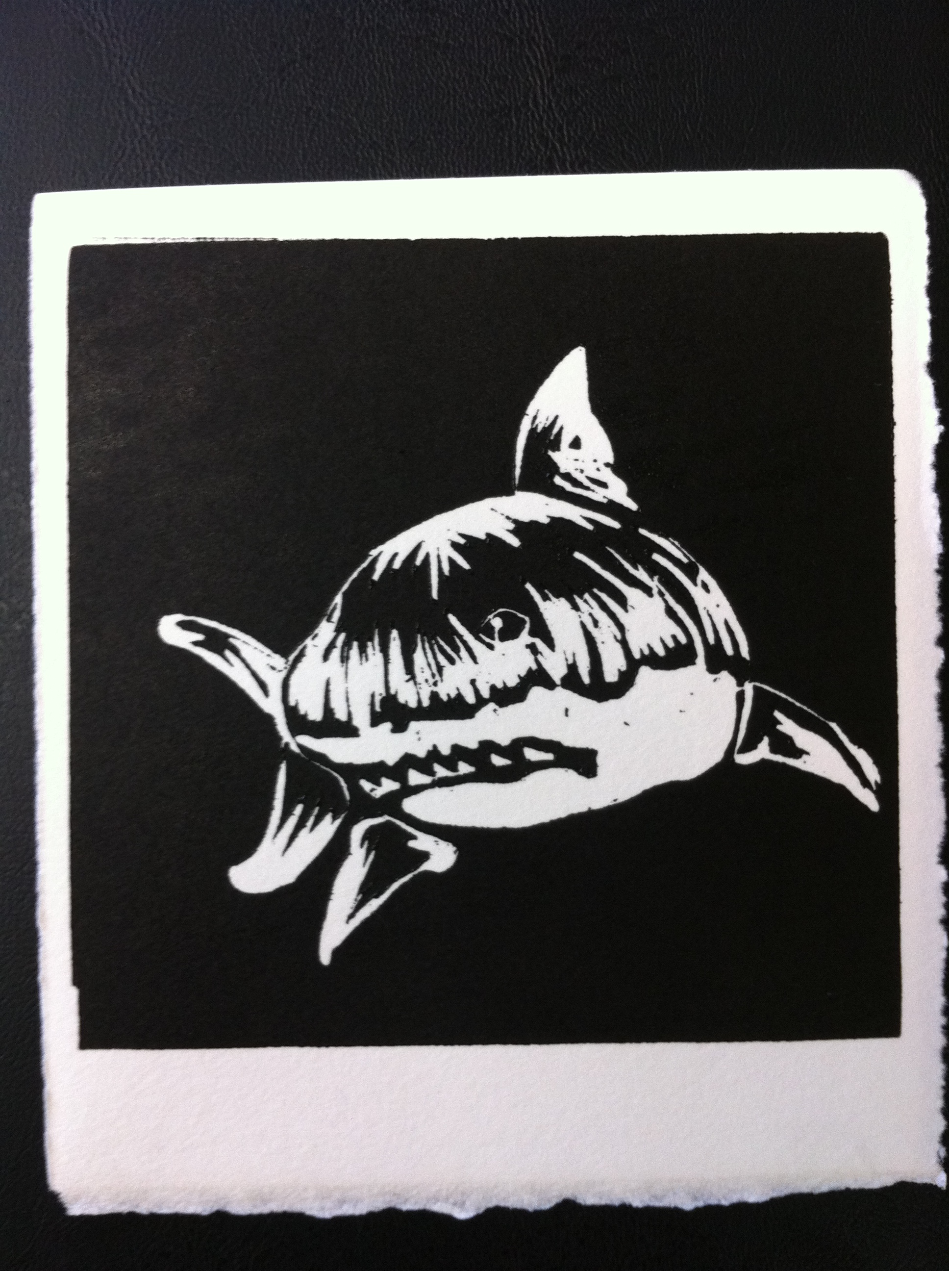The great white shark / El gran tiburon blanco: fondo de pantalla ...