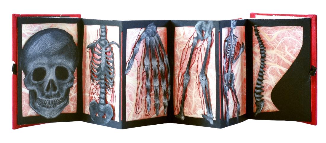 anatomia spread