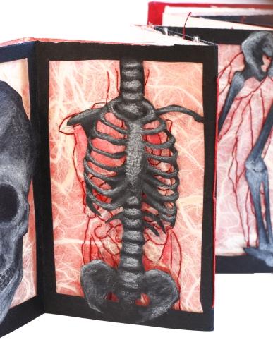 anatomy study 2 detail